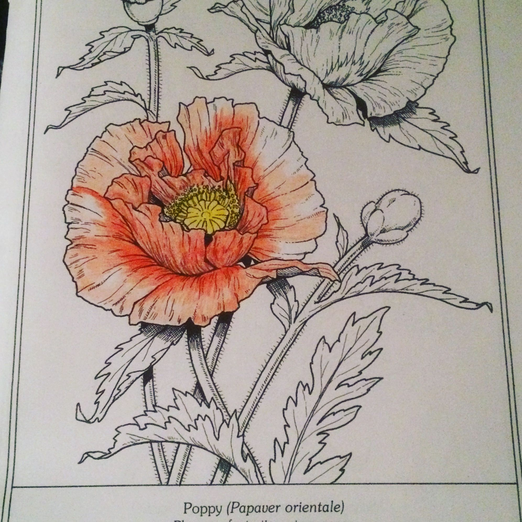 Pin by Alana Serbiá on bujo | Pinterest | Bujo, Adult coloring and ...