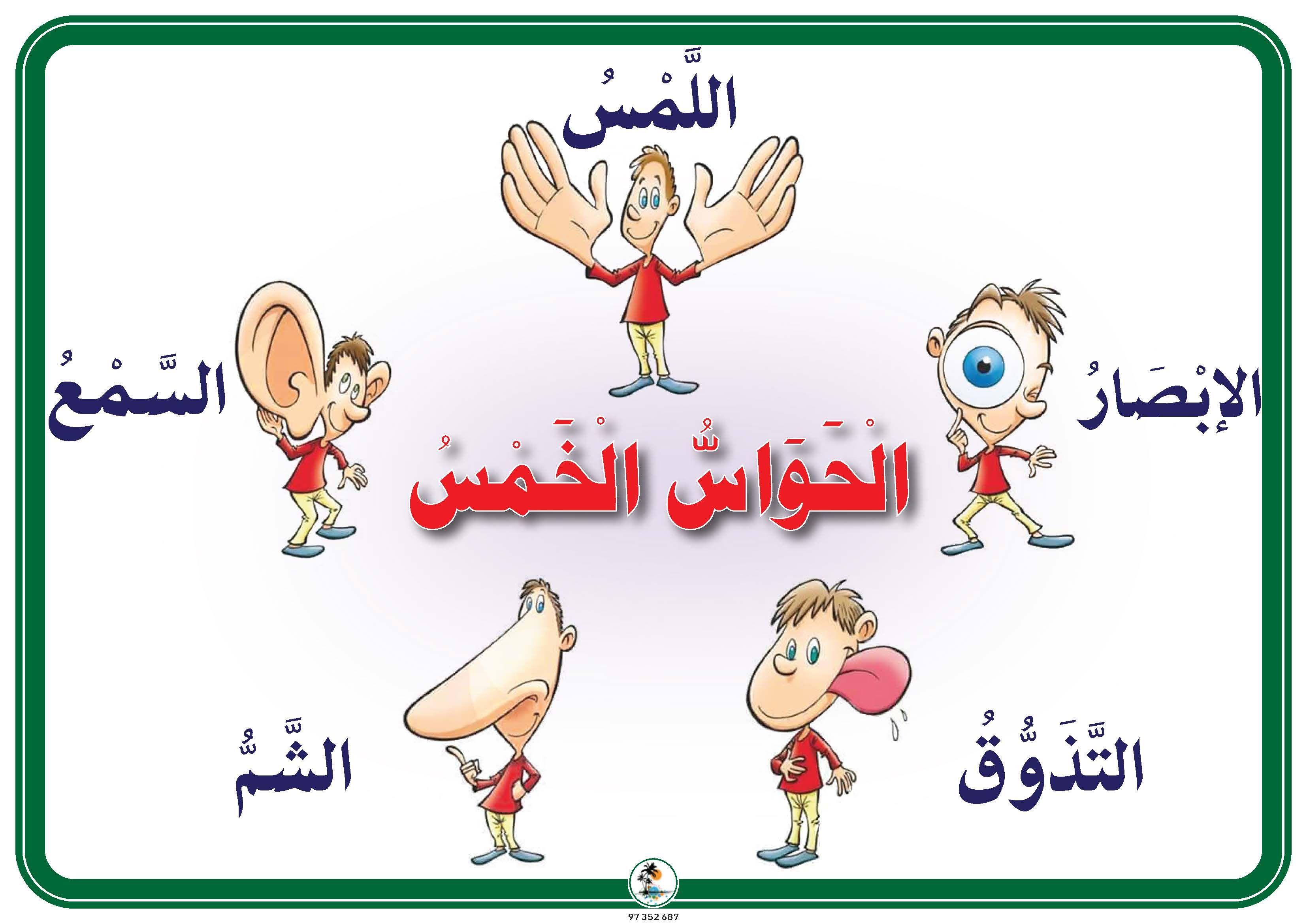 الحواس الخمس Arabic Kids Precious Children Learning