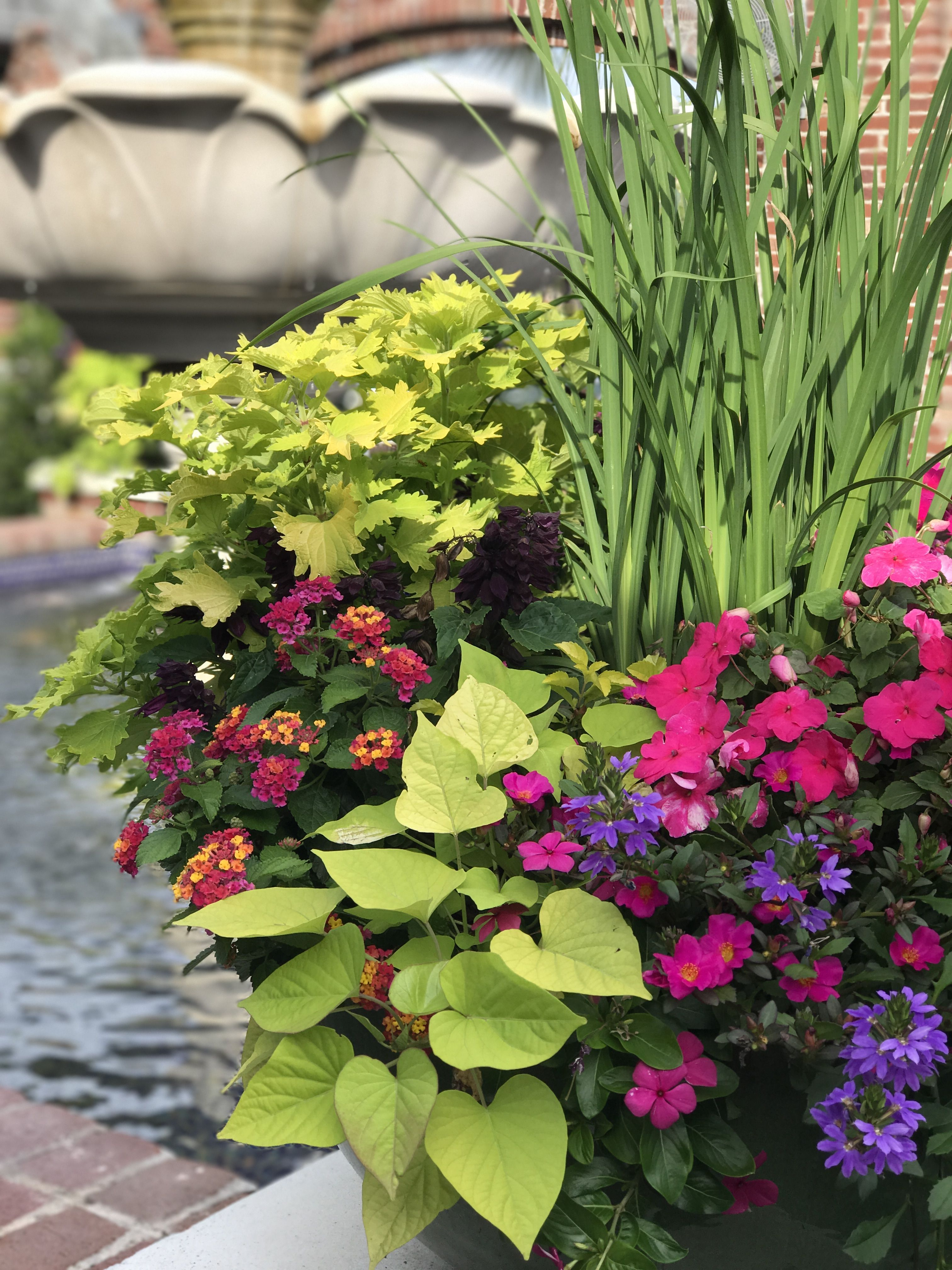 Container Garden, Gardening, Garden, Yard Landscaping, Urban Homesteading, Horticulture