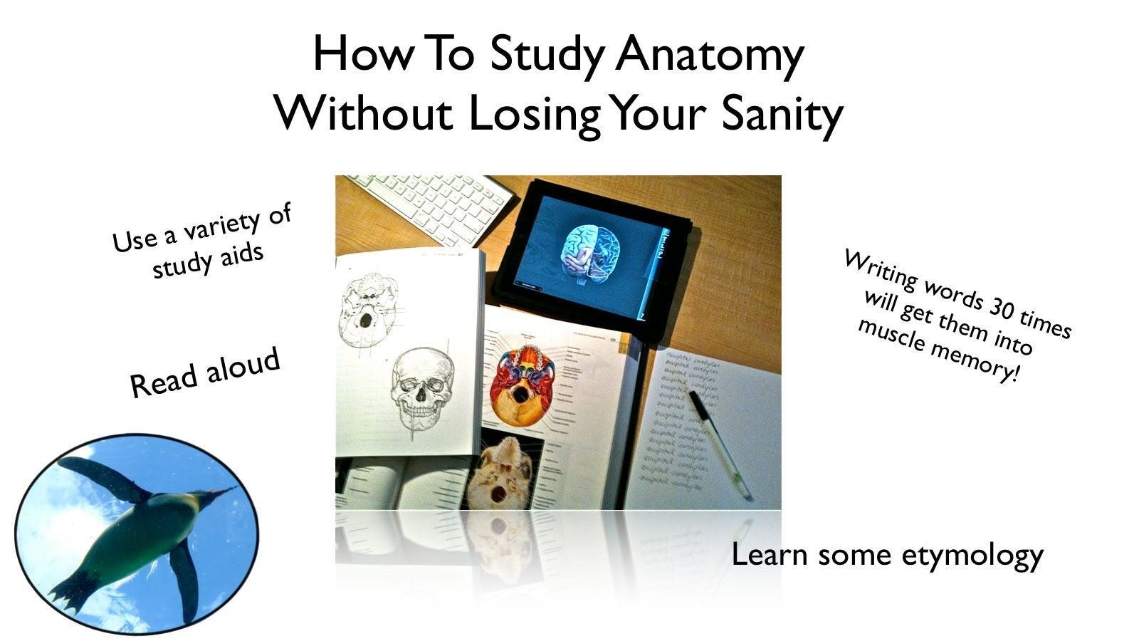How To Study Anatomy Without Losing Your Sanity! | Just CA stuff ...