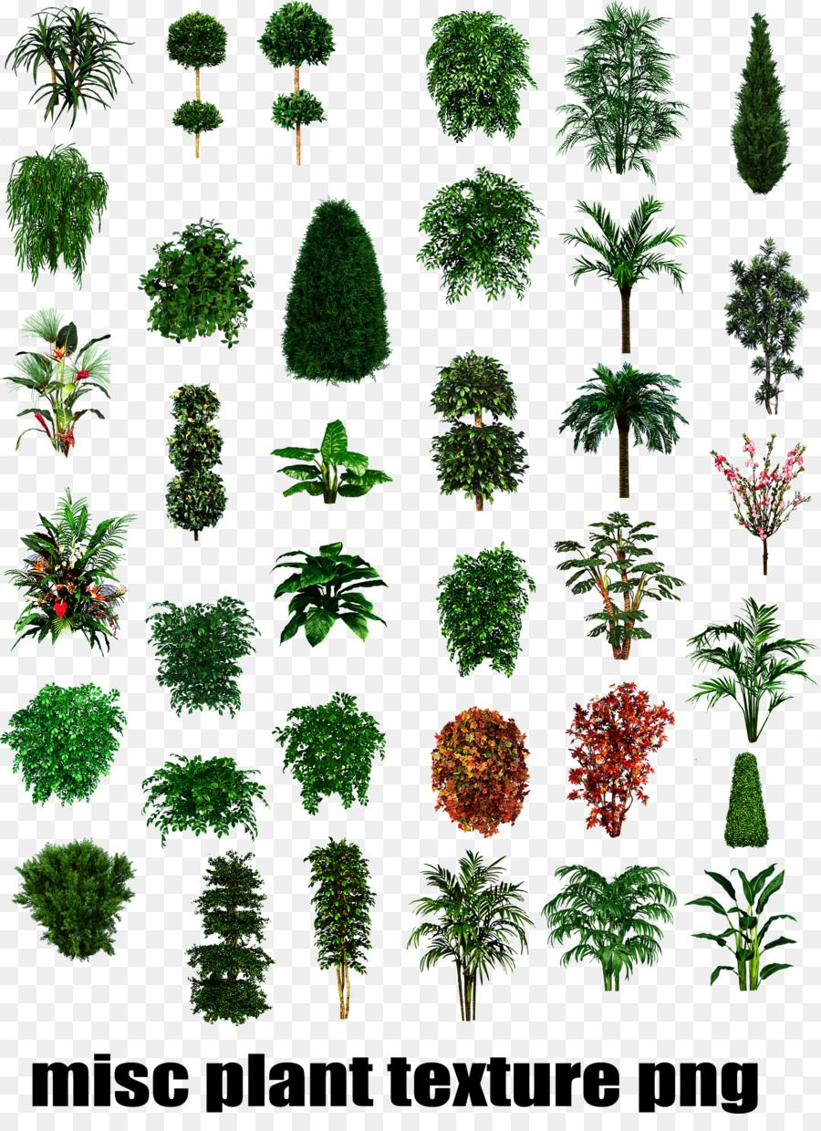 Tropical Plant Types Shrub Tree Plant Trees To Plant Tropical