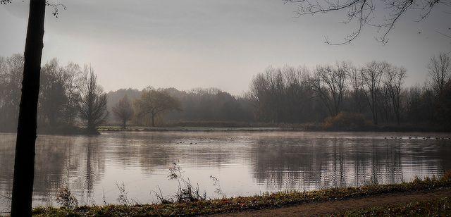 Gestel - Eindhoven: een ochtend in december bij de Hanevoet vijver 2013 Fotograaf: Frans van Beers