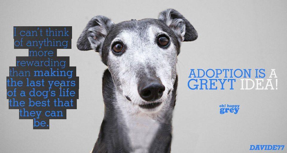 adopt senior Senior dog, Dogs