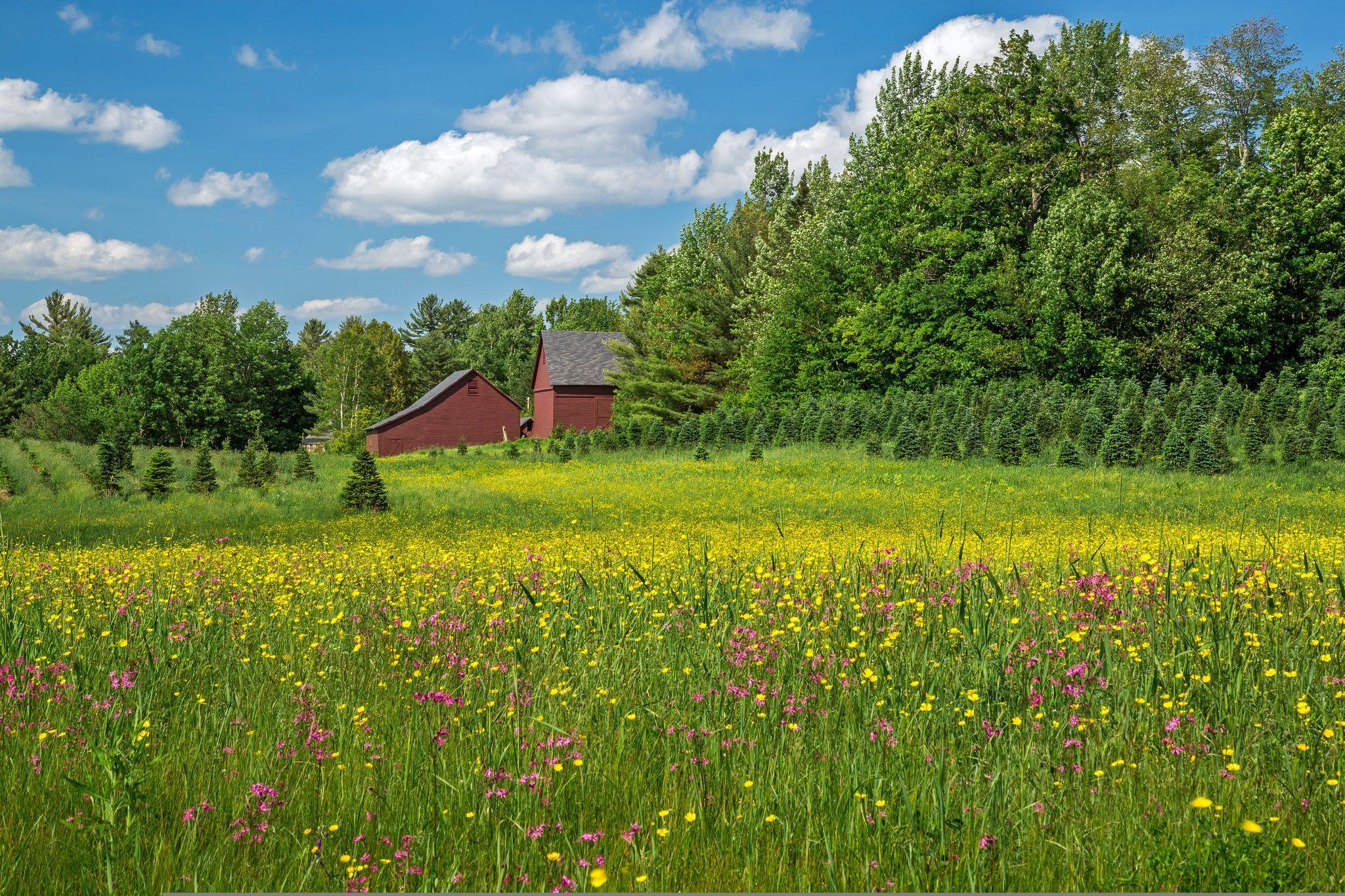 Загородная природа в картинках