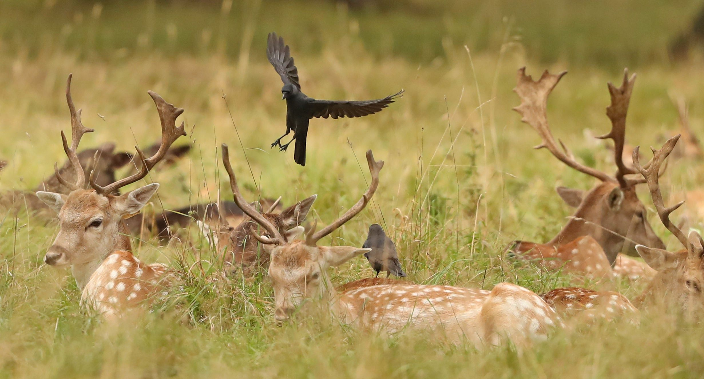 The week in wildlife in pictures wildlife animals