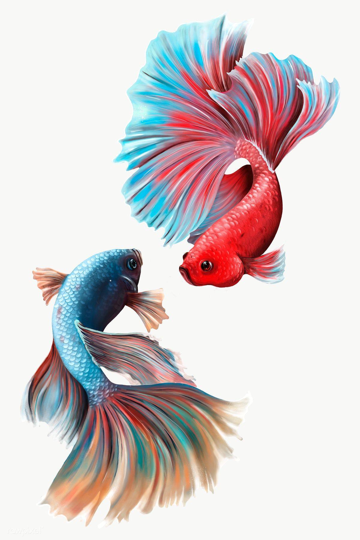 Colorful Betta Fishes Design Element Premium Image By Rawpixel Com Te Betta Hewan Ikan Cupang