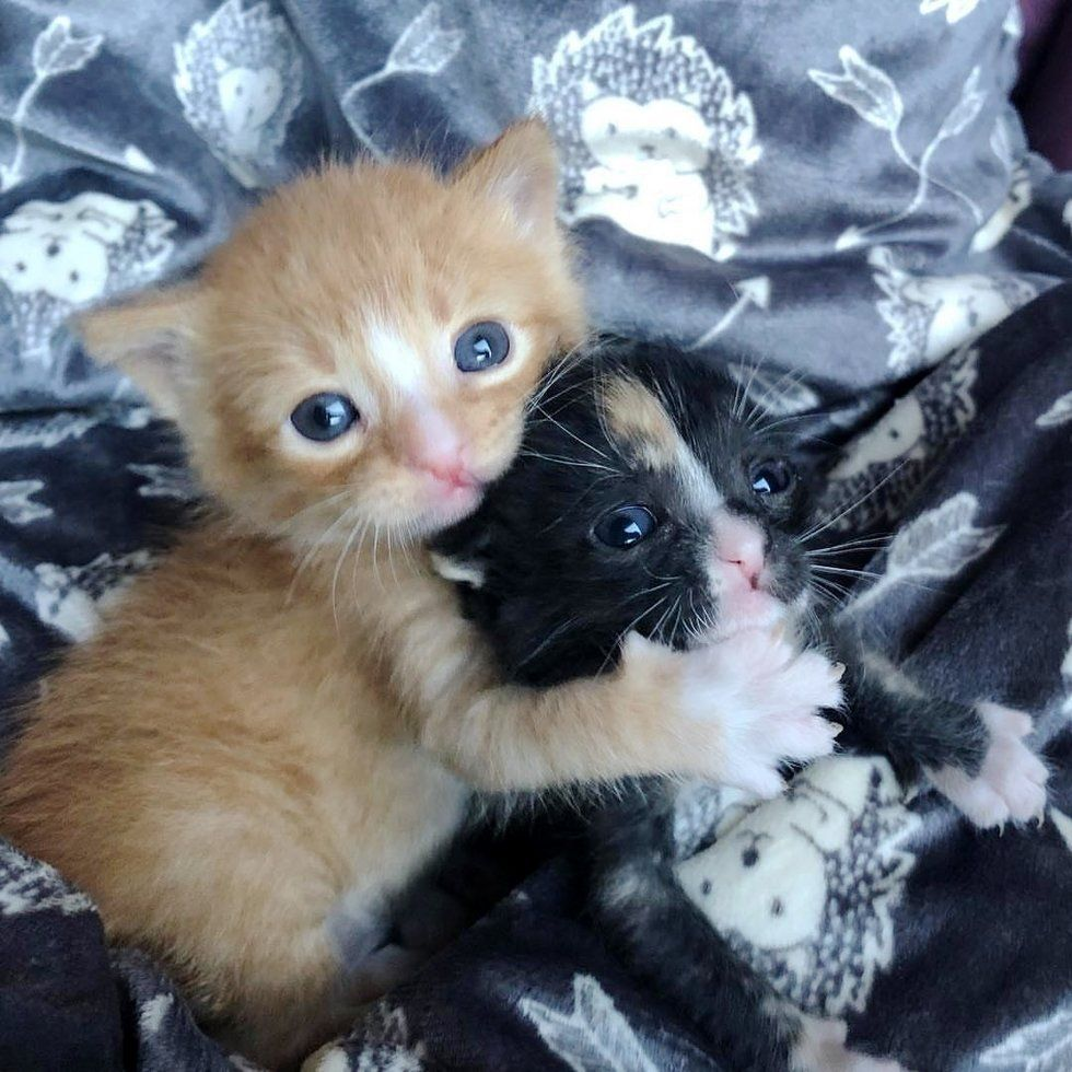 Kitten Brother And Sister Keep Each Other Alive Until They Are Saved Cute Cats And Kittens Baby Cats Kittens And Puppies
