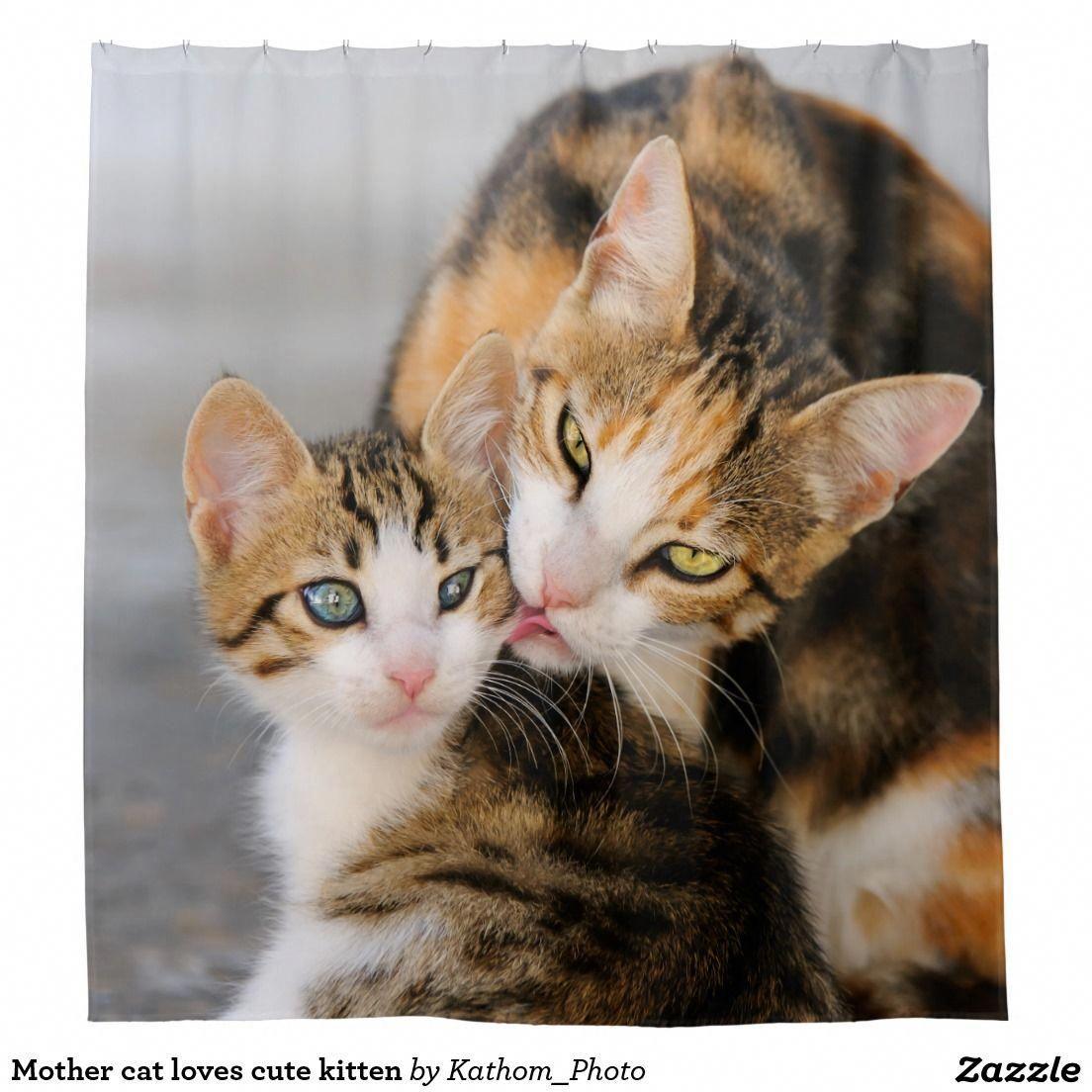 Mother Cat Loves Cute Kitten Felineleukemia Kittens Cutest Kittens Cutest Baby Mother Cat