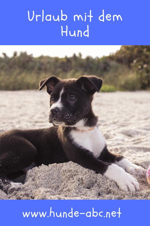 Urlaub Mit Dem Hund Online Ratgeber Nachlesen Mit Bildern