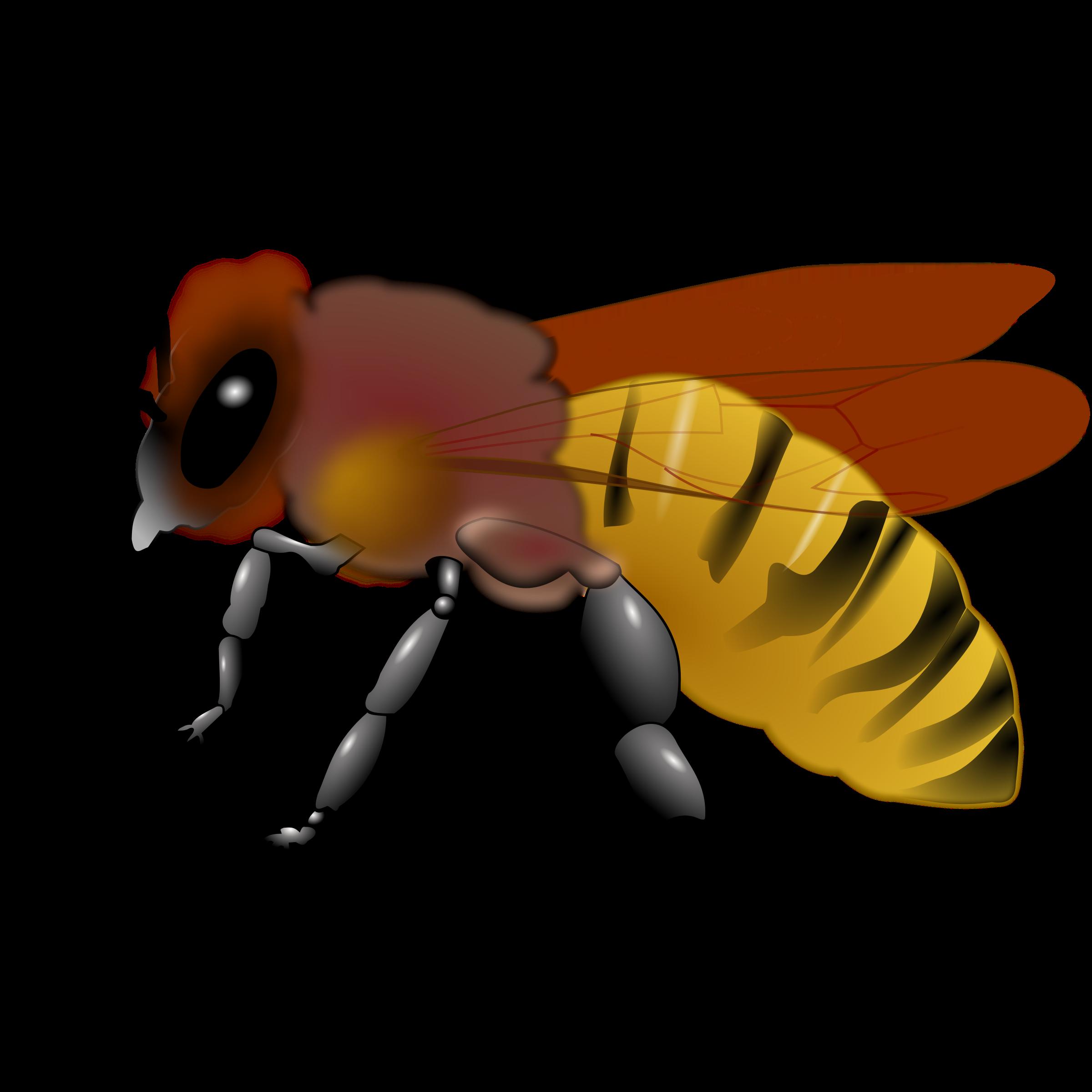 bee clipart honeybee 3d bee pinterest clip art free rh pinterest com honey bee clip artr honeybee clipart