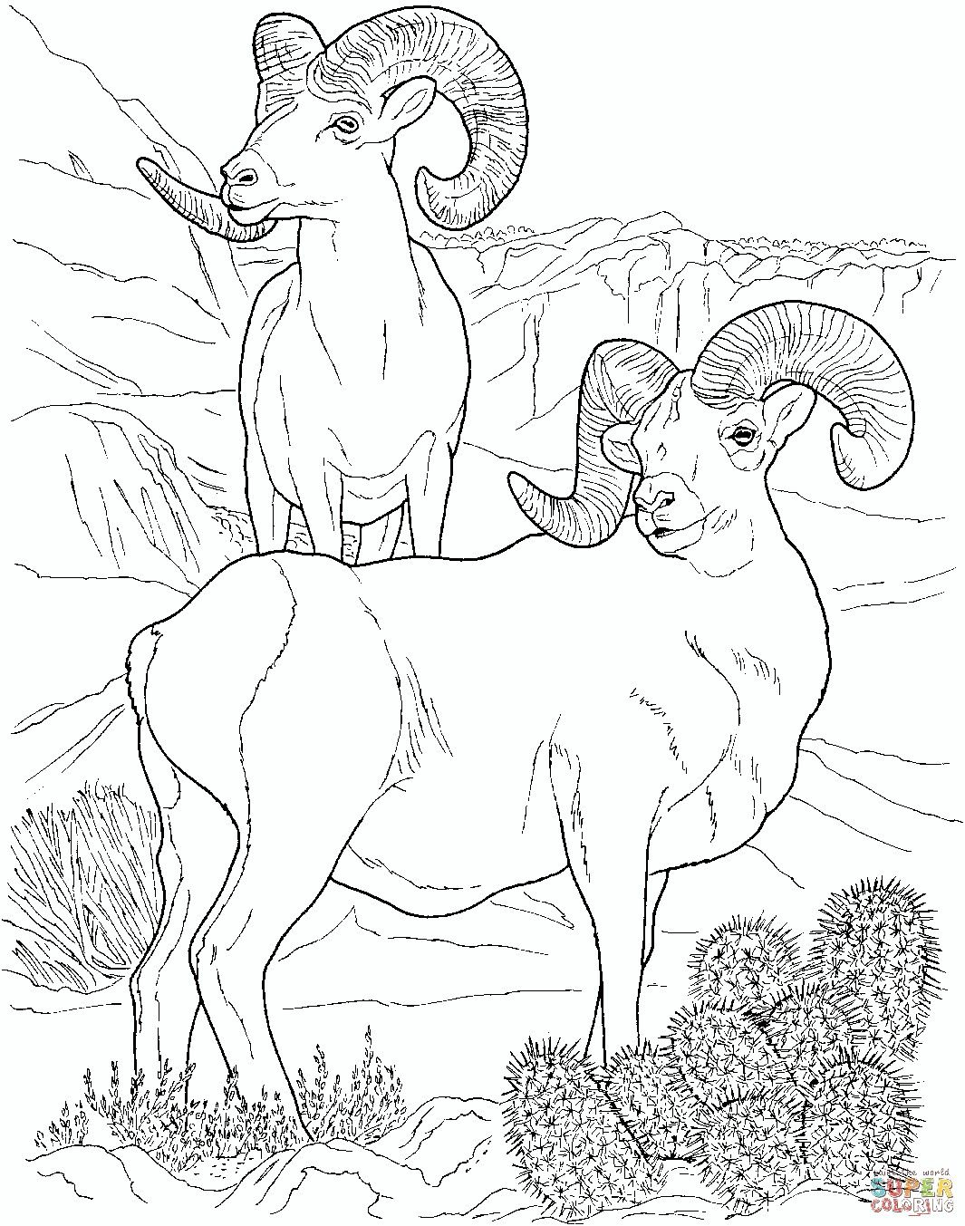 Coloring Pages Image By Kelli Priest On Desert Unit