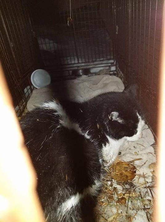 FOUND Cat in Bridgeland Riverside Pls share & RT to