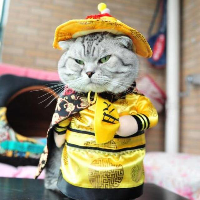 Funny Cat Outfit Cat Costumes Pet Costumes Funny Cats