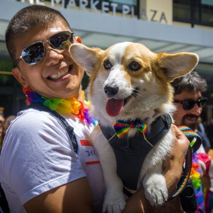 Hey Socalcorgibeachday And All Our Corgs To The South Lia Will Be Coming For Saturday S Cbd To Visit Some Of Our Favorite Socal Corgs Looking Forward To Corgi Dog Corgi Pretty