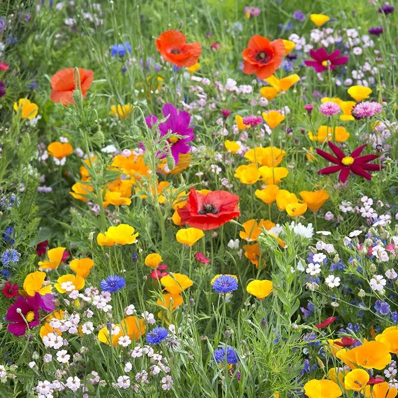 West Wildflower Seed Mix In 2020 Wild Flower Meadow Wildflower Garden Wildflower Seeds