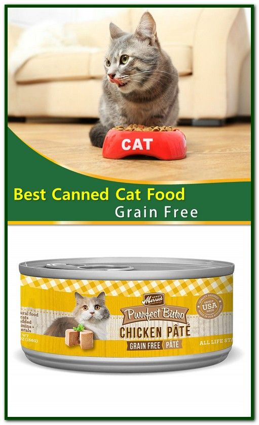 Best Canned Cat Food Grain Free Canned cat food, Cat