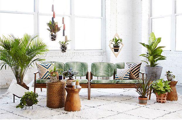 Und ewig grünt die Zimmerpflanze: Was wann «Saison» hat, von damals bis heute.