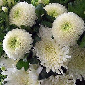 De Estos Crisantemos Use Para Mi Bouquet De Novia Com Imagens