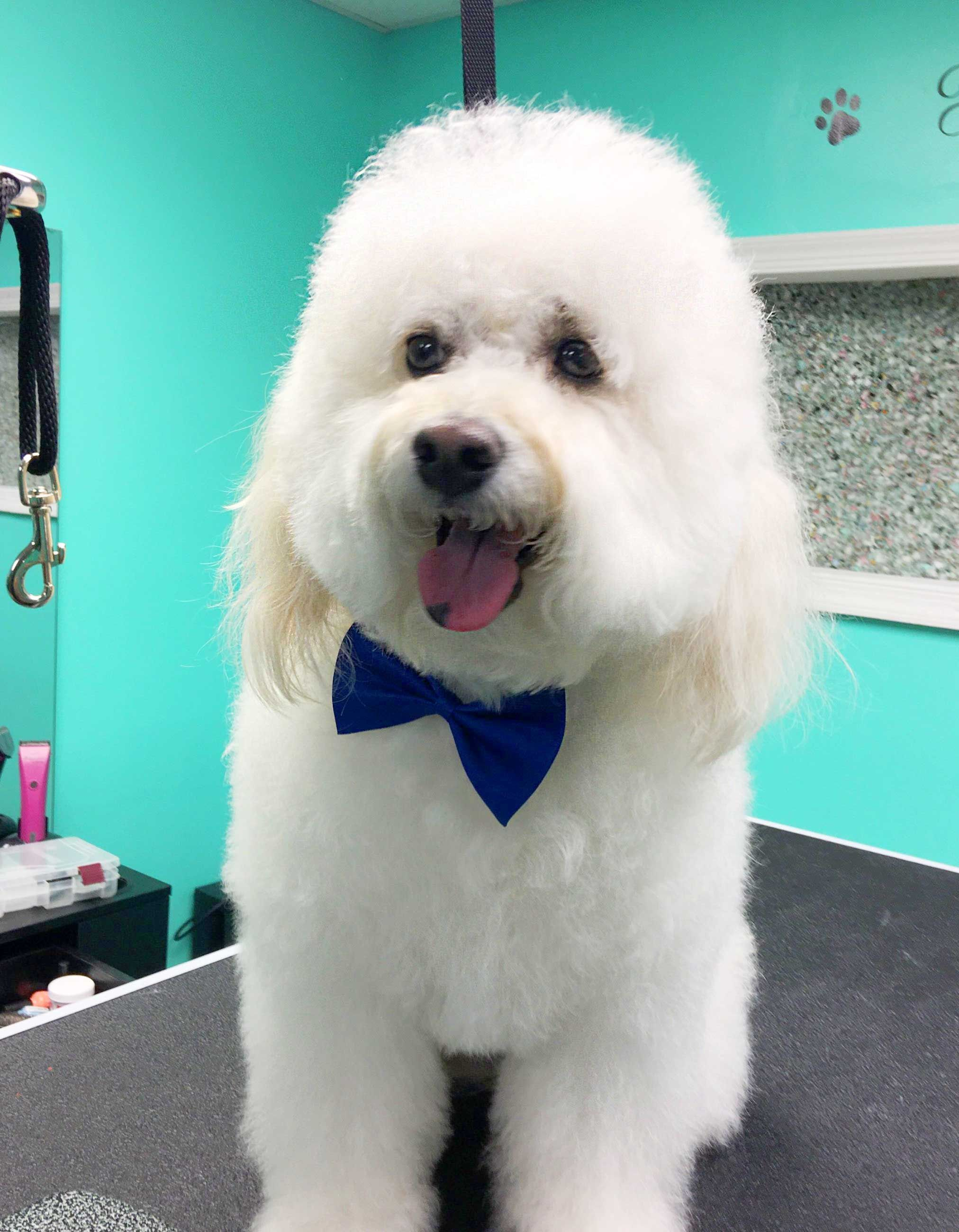 Happy Dog Looking Snazzy Thanks To Coco Clips Dog Grooming Dog