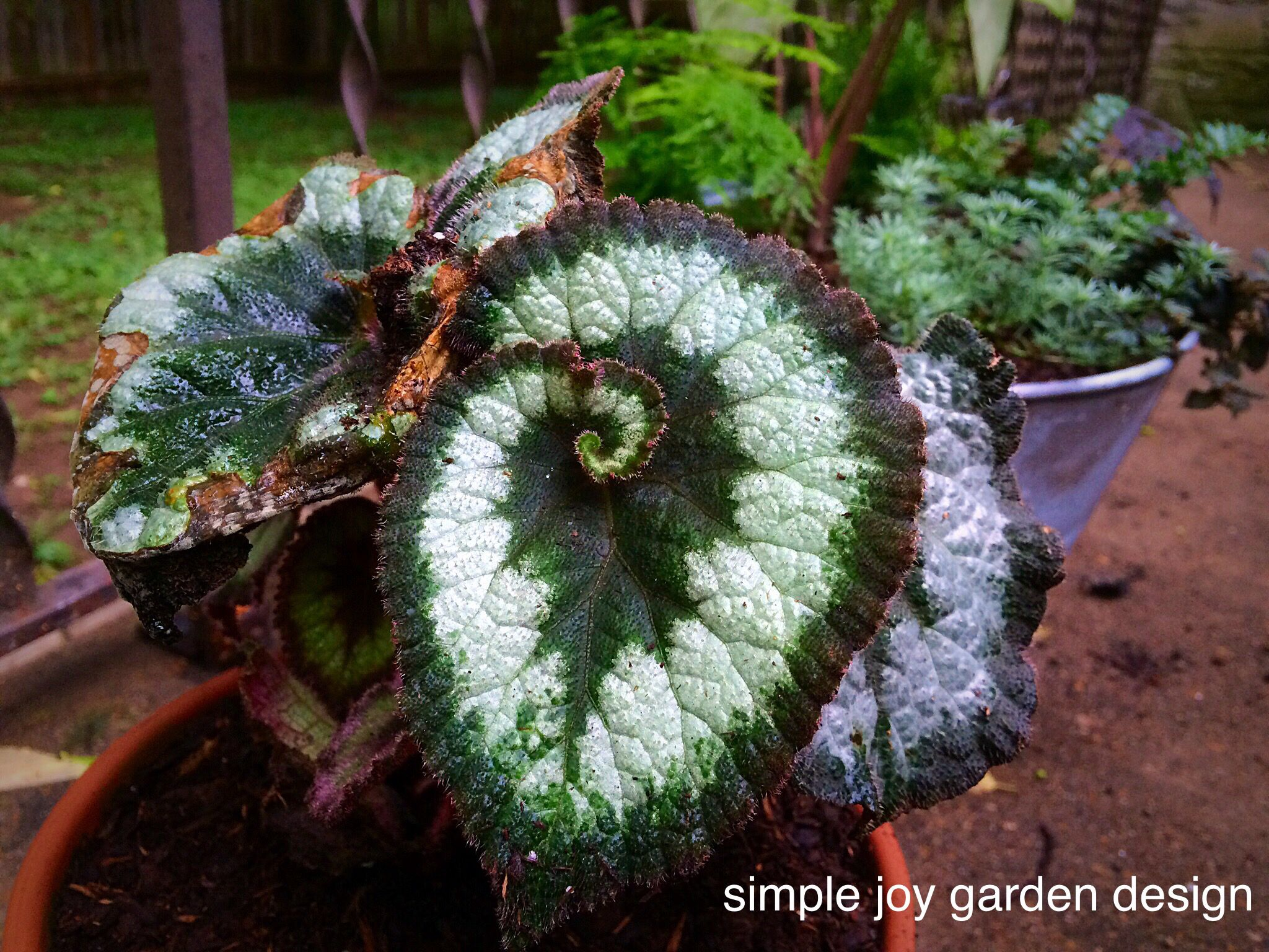 simple joy garden design home is where your plants are