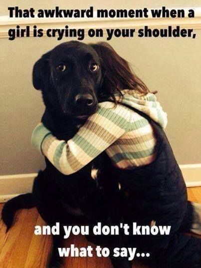 25 Funny Images To Cheer Up A Friend Funny Animal Memes Funny Dogs Funny Animals