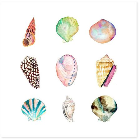 Sea Shell Collection Art Print Watercolor Sea Shells Art Beach
