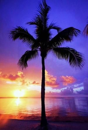 Palm Sunset Summer by janet