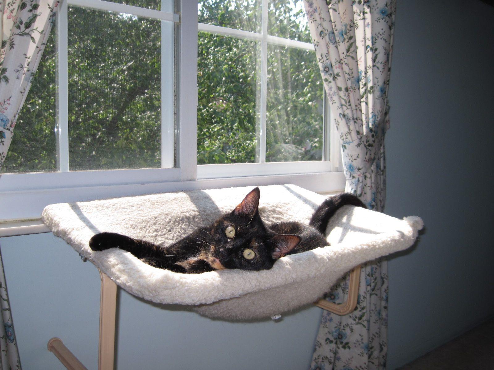 cat hammock jpg  1600  1200  cat hammock jpg  1600  1200    ok cats   pinterest   cat hammock      rh   pinterest