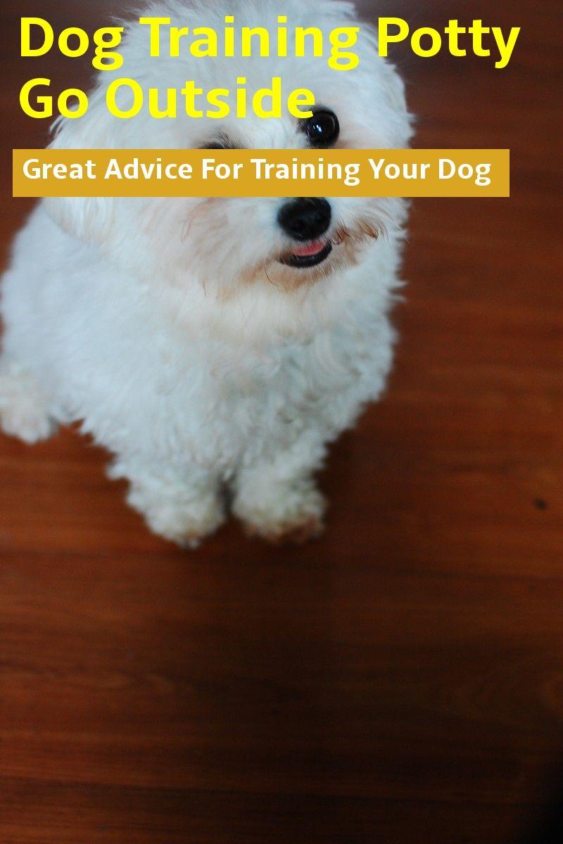 Basic Dog Training Potty Go Outside Dog Potty Training Dog Training Basic Dog Training