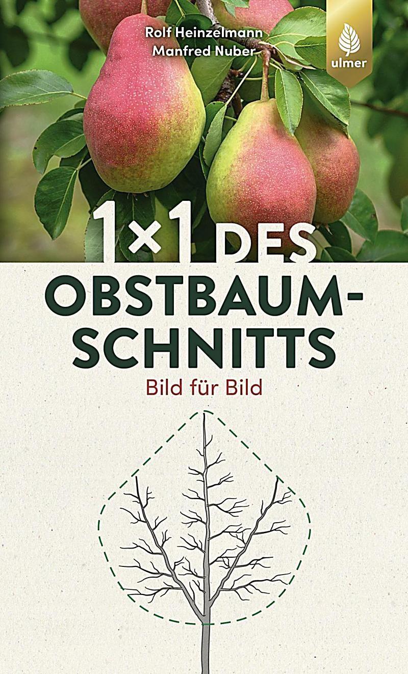 1 X 1 Des Obstbaumschnitts Buch Bei Weltbild De Online Bestellen In 2020 Obstbaumschnitt Obst Apfelbaume Schneiden