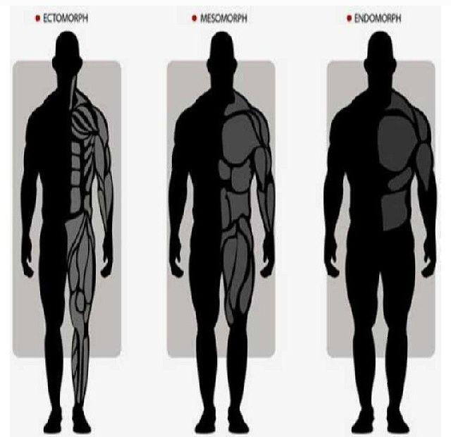 Men body types   Work this workout   Pinterest   Man body