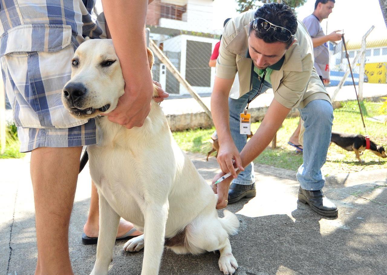 PEDRO HITOMI OSERA: Campanha tem meta de imunizar 68 mil animais