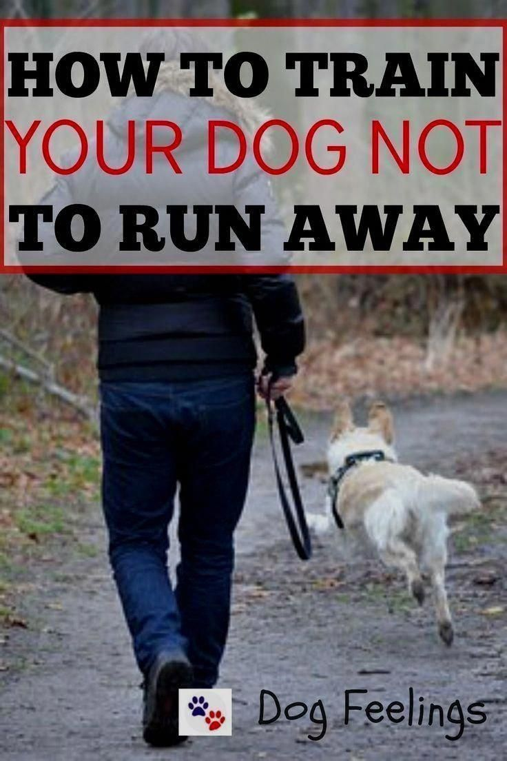 Every Home Animal Dog Must Know And Have The Ability To Follow A