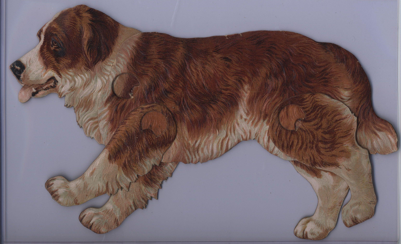 The St Bernard Dog Canis Familiaris Bernard Dog Dogs Tame Animals
