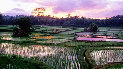Ubud. Things to do there from Lonely Planet.