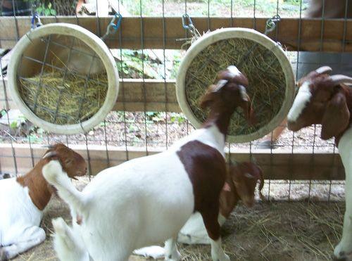 Clear Creek Farms Goat Barn Dairy Goats Angora Goats