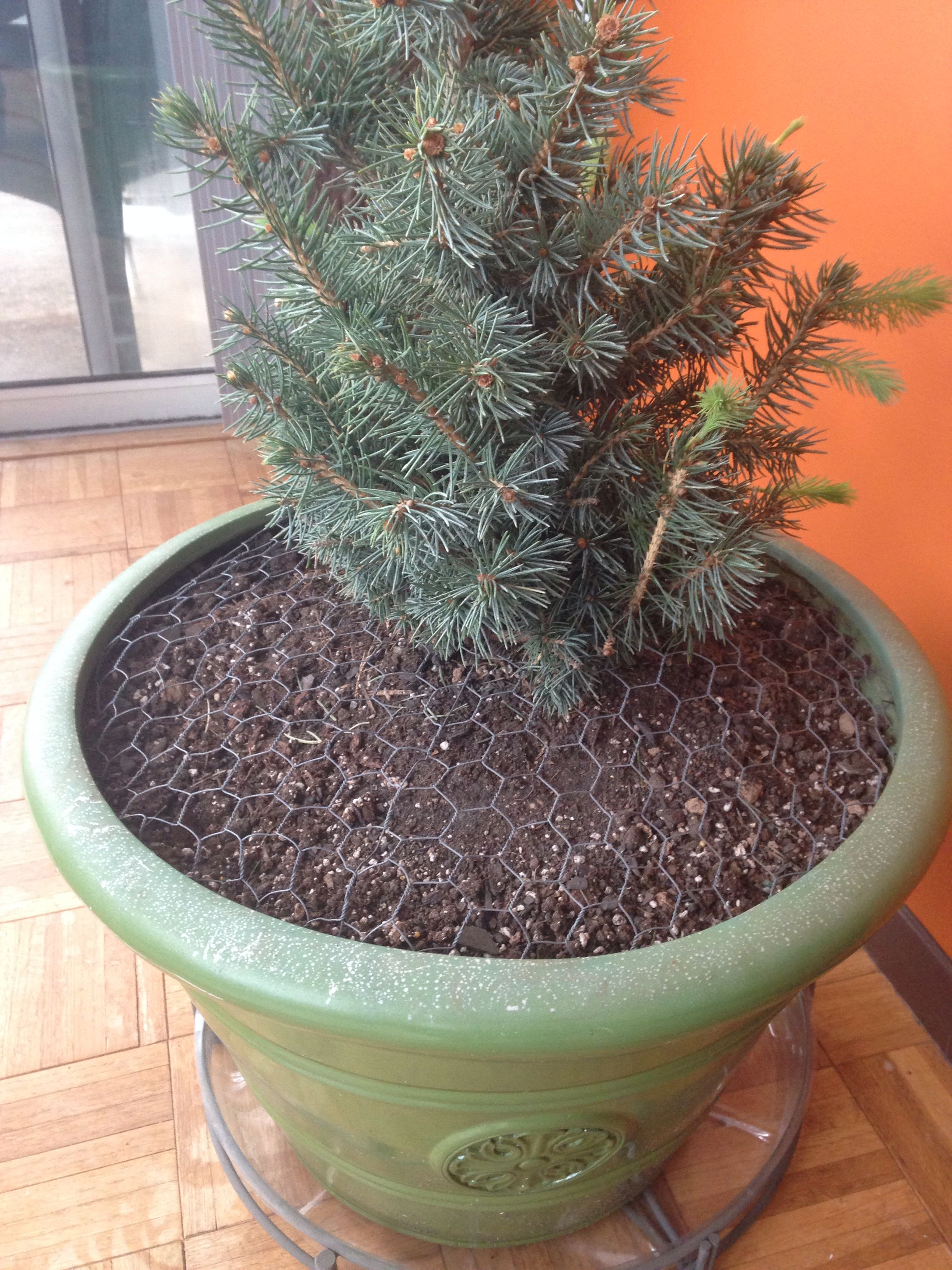 Use Chicken Wire In Your Indoor Potted Plants To Keep Your 640 x 480
