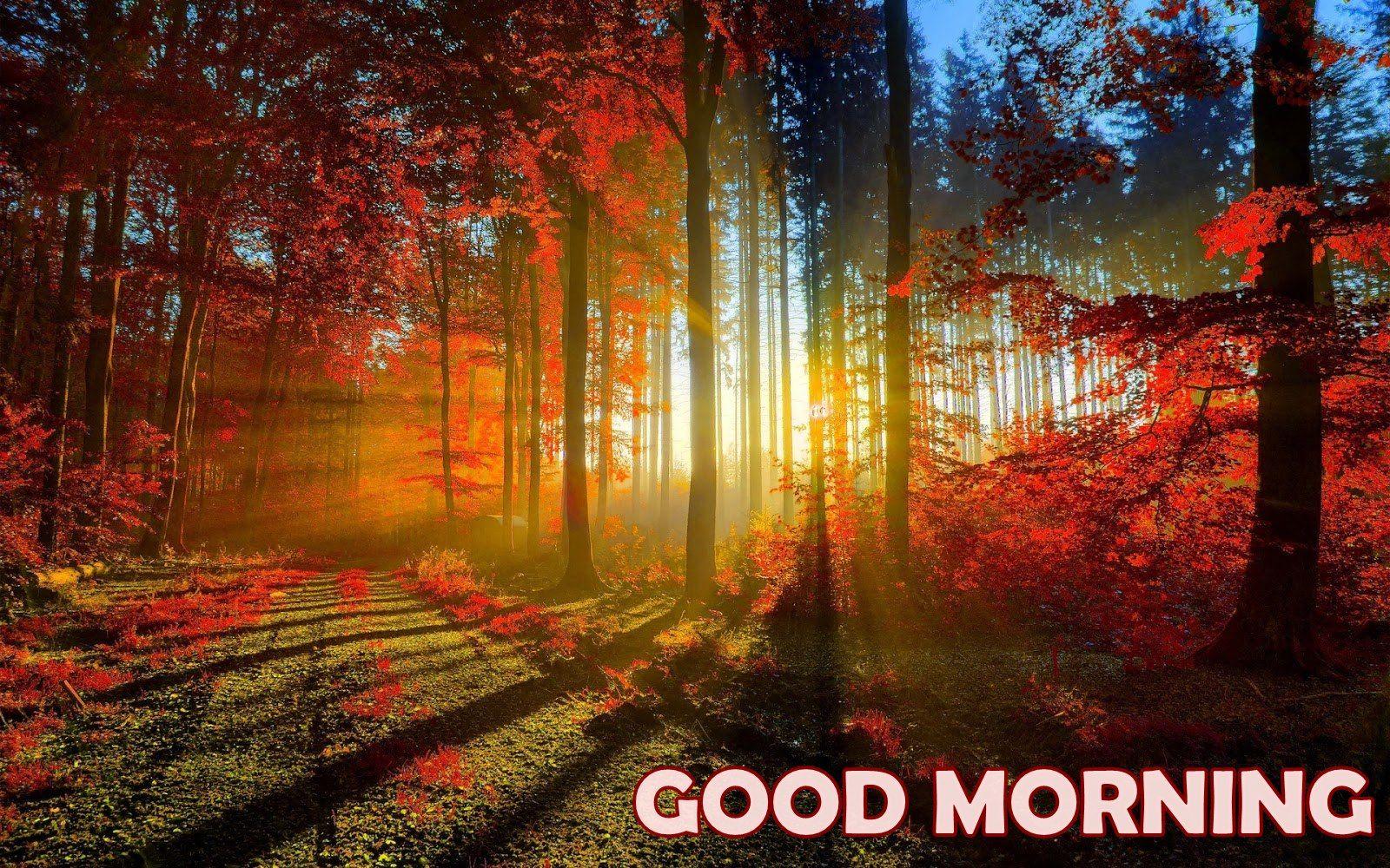 Beautiful Good Morning Nature Wallpaper 07271 Wallpaperspick Com Scenery Wallpaper Landscape Wallpaper Autumn Scenery