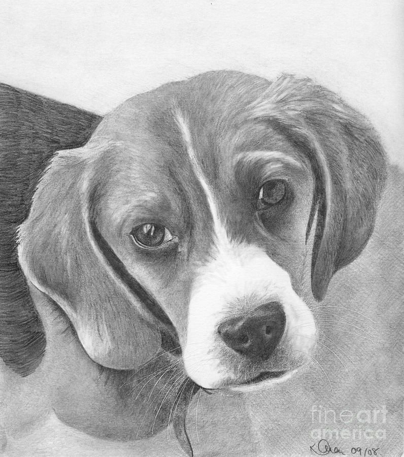 Beagle In 2020 Beagle Art Animal Drawings Dog Art