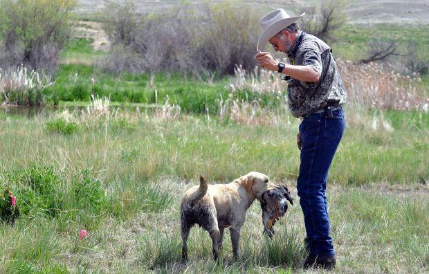 Outdoor Bird Dog Training Tradition Draws International Crowd