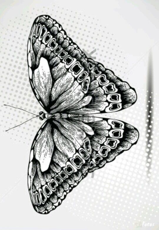 Advanced Butterfly Coloring Pages : Butterfly coloring pages colouring adult detailed advanced