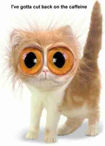 Orangutail got into the coffee AGAIN at....