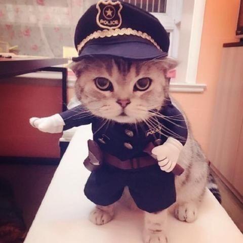Kedi polis olmuş