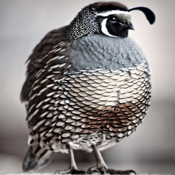 Cold out and bundled up in a thermal, sweater, blazer, and jacket. Think I might look a little something like this. | I want a quail.