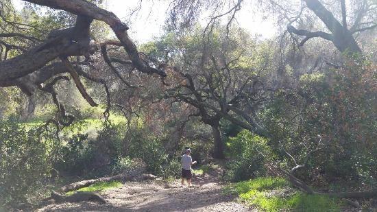 Ronald W Caspers Wilderness Park California Travel San Juan Capistrano Wilderness