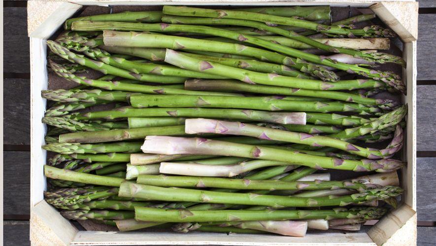 how to grow Fresh cut asparagus