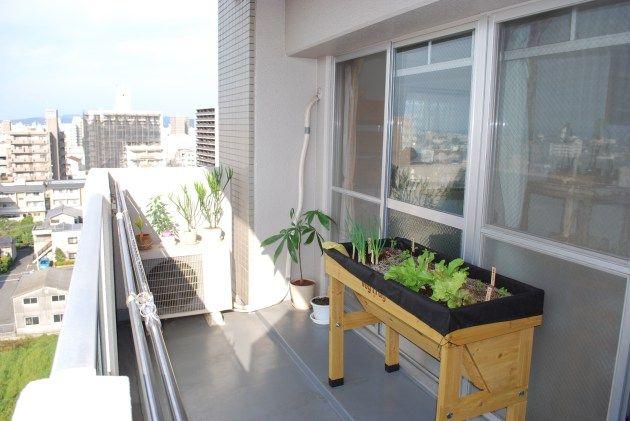 岡山市北区のマンションベランダでベジトラグ菜園をスタート