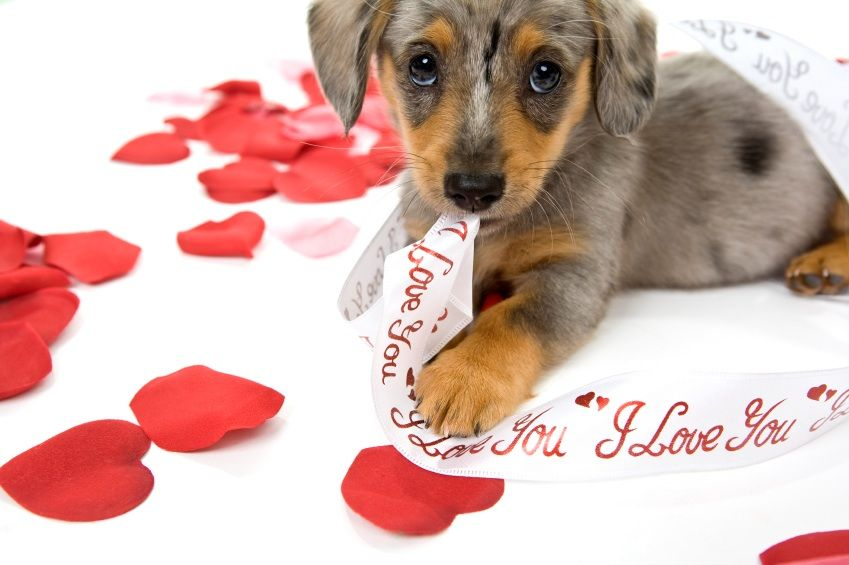 Puppy Valentine S Day Wallpapers Valentines Day Puppy Wallpapers