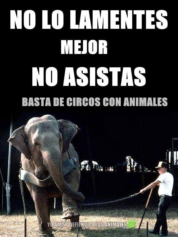 No A Los Circos Con Animales Derechos De Los Animales Mamá De Perro Bienestar Animal
