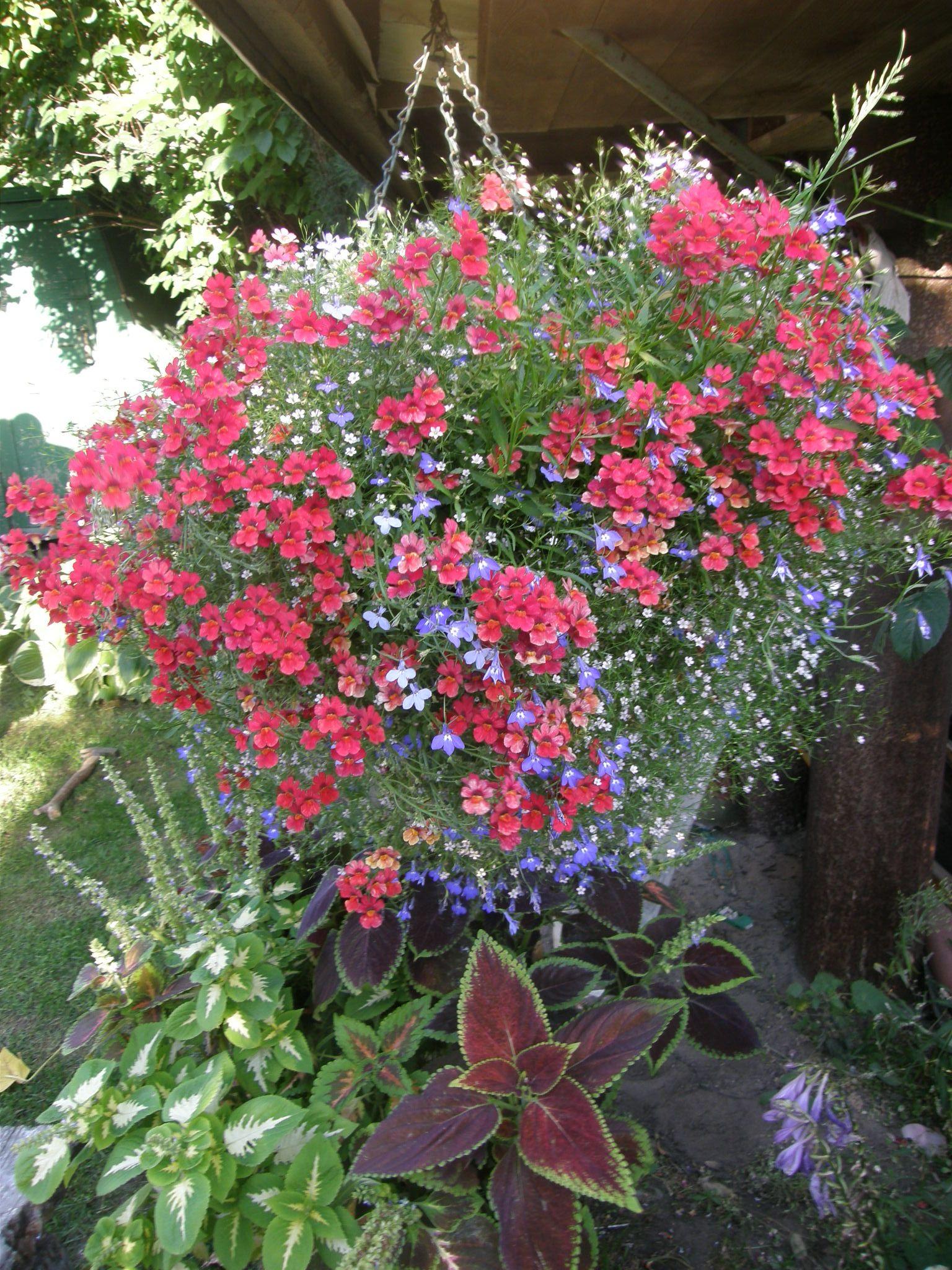 Hanging Basket With Lobelia Nemesia And Gypsophila Very Bright